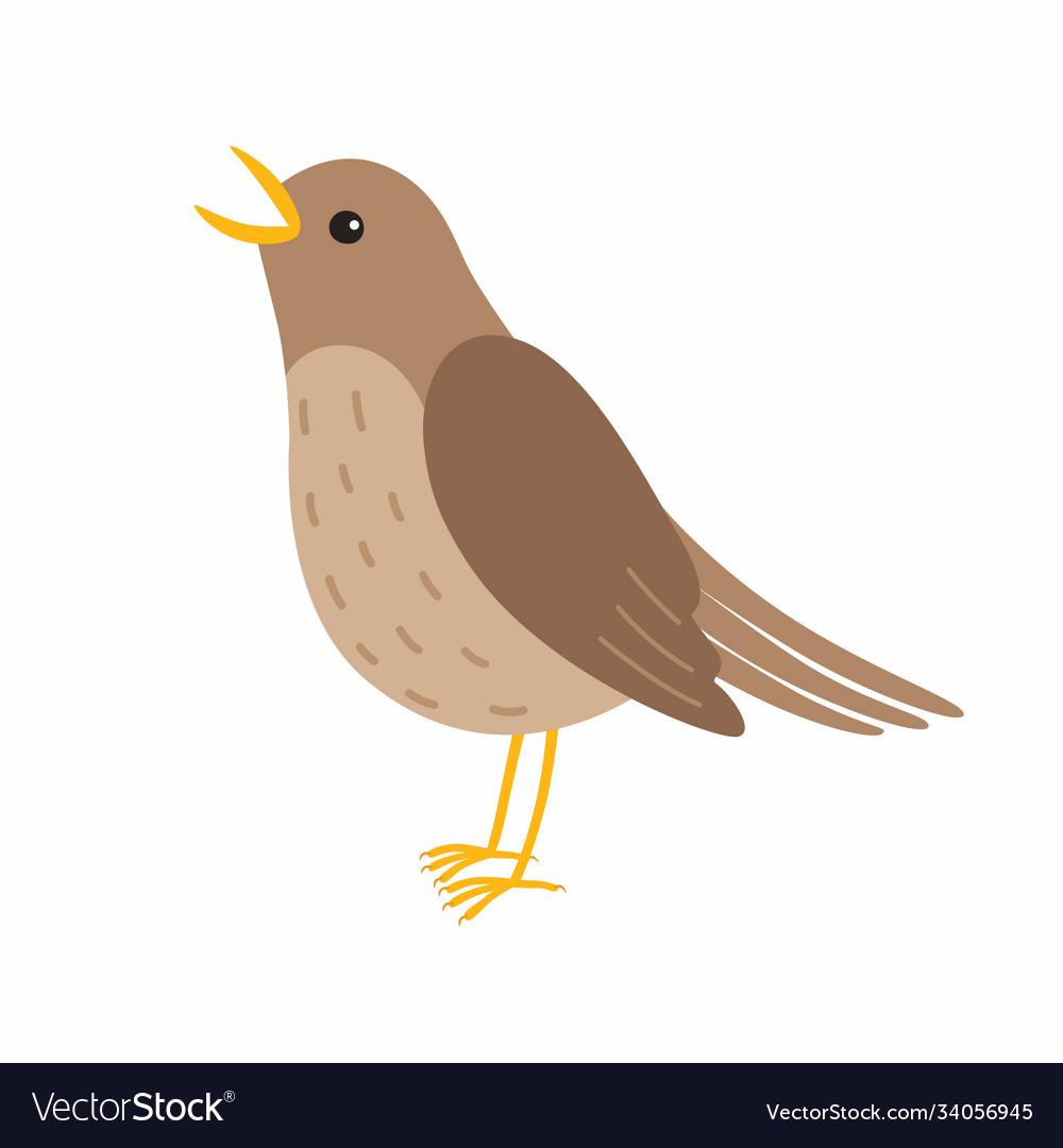 Nightingale bird isolated on