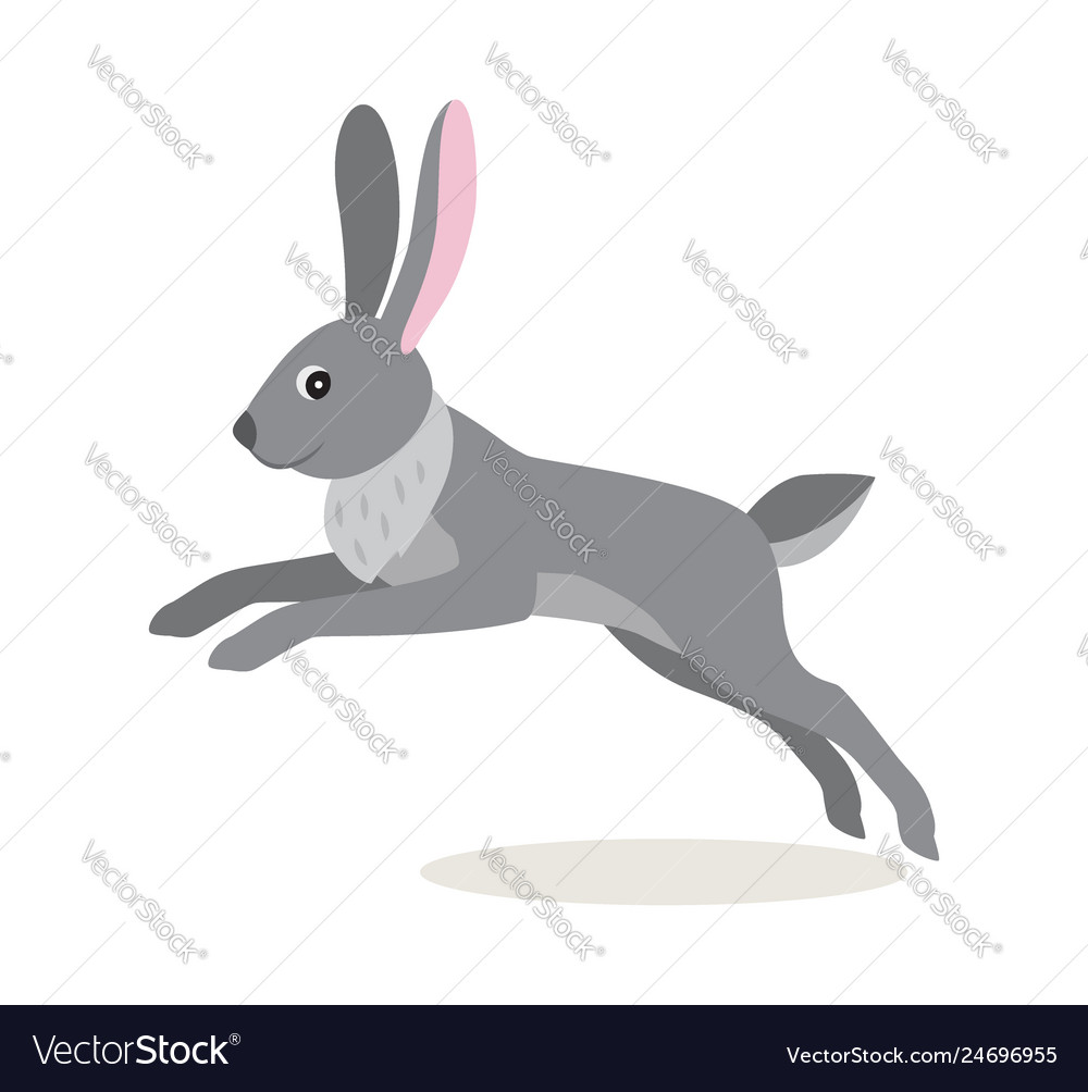 Cute gray jumping rabbit hare isolated on white