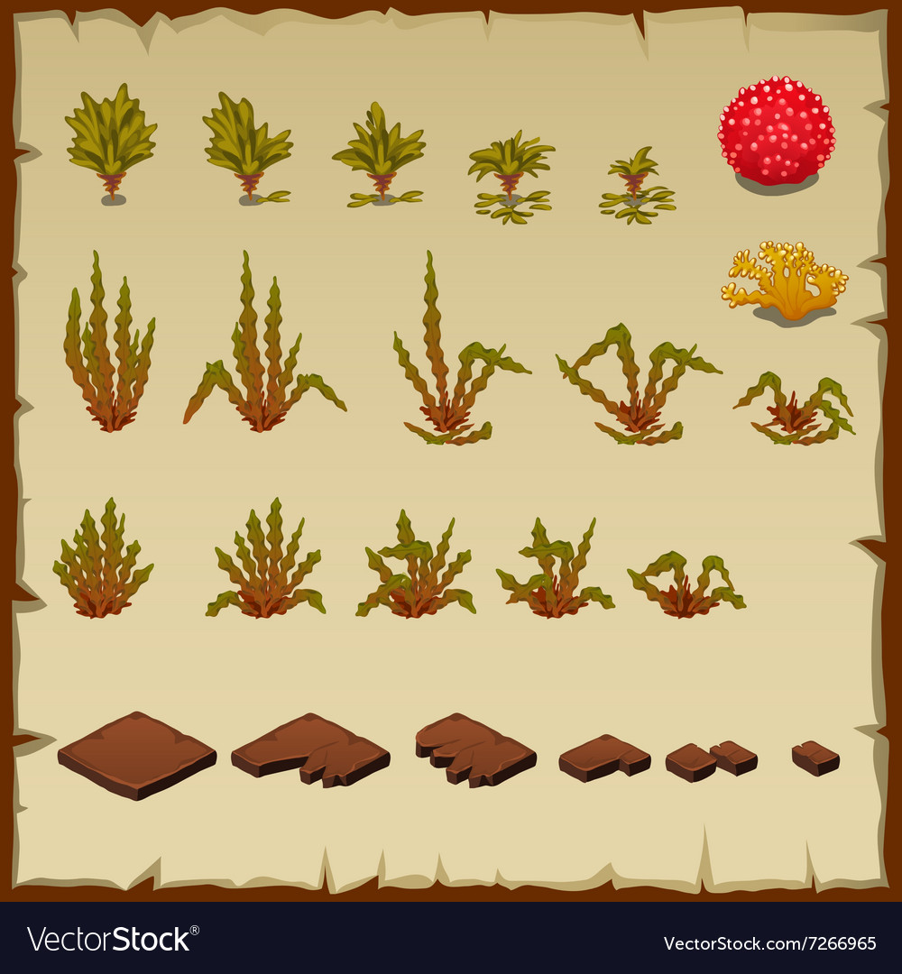 Variety underwater plants growth stages of algae vector image