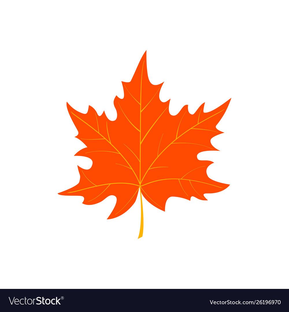 Autumn Cartoon Leaf Isolated On White Background Vector Image