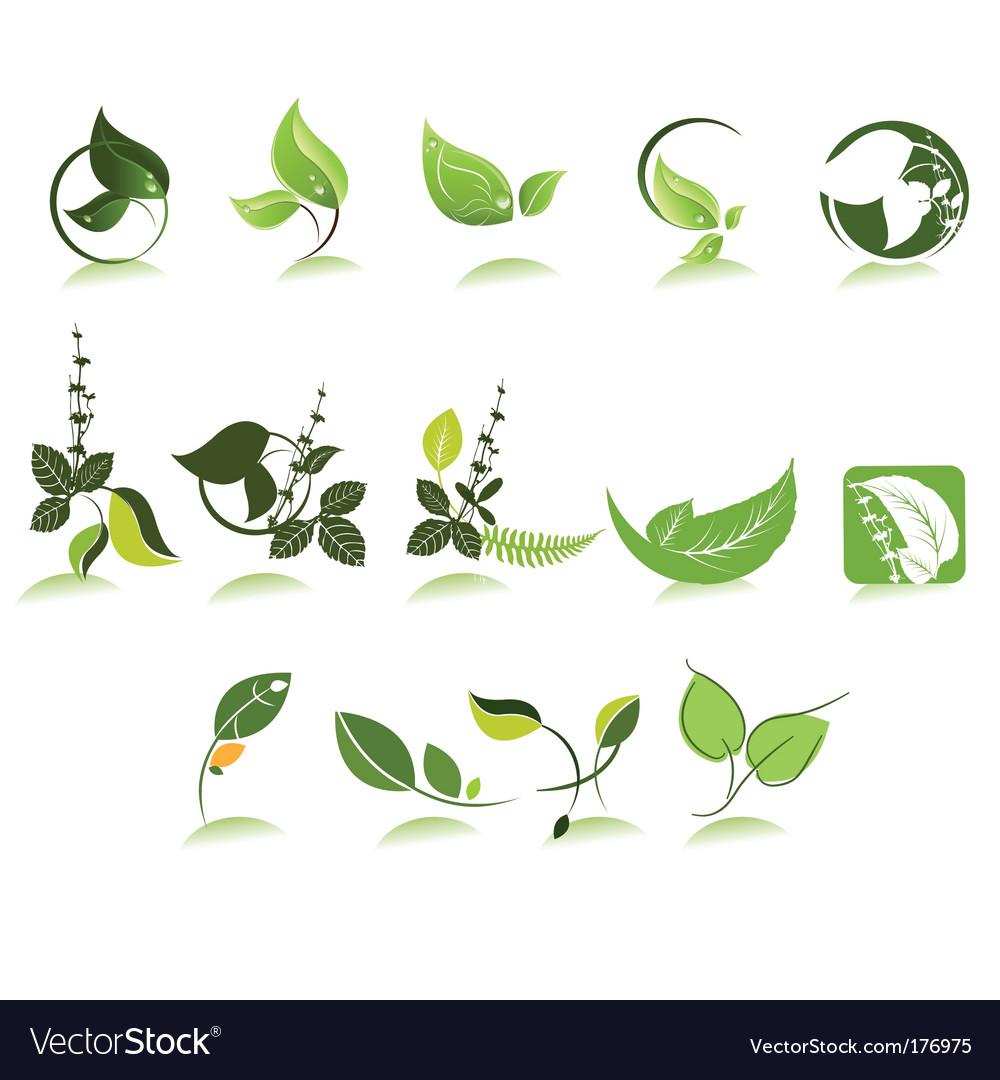 Herbal icons vector image