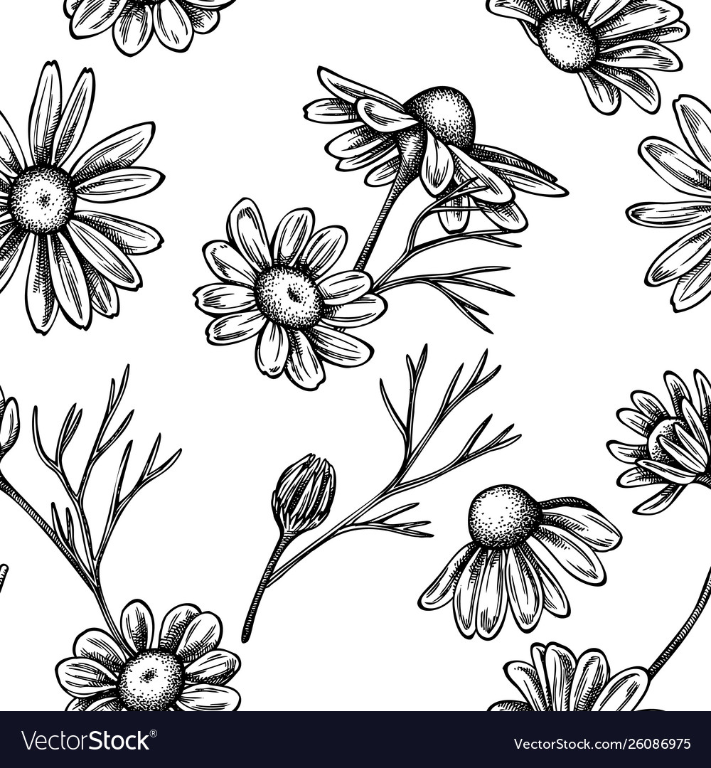 Seamless pattern with black and white chamomile