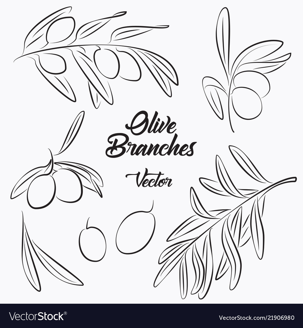 Black olives and olives branches