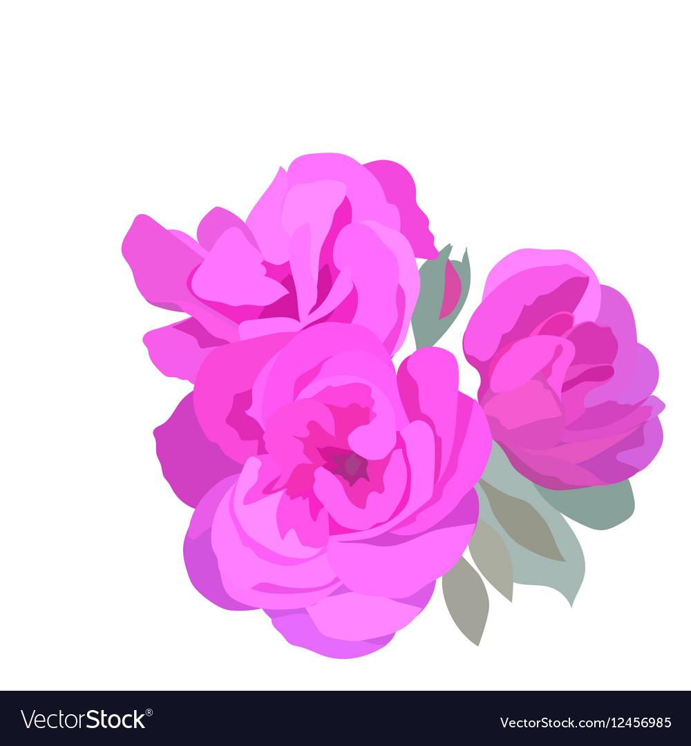 Watercolor Pink Roses vector image