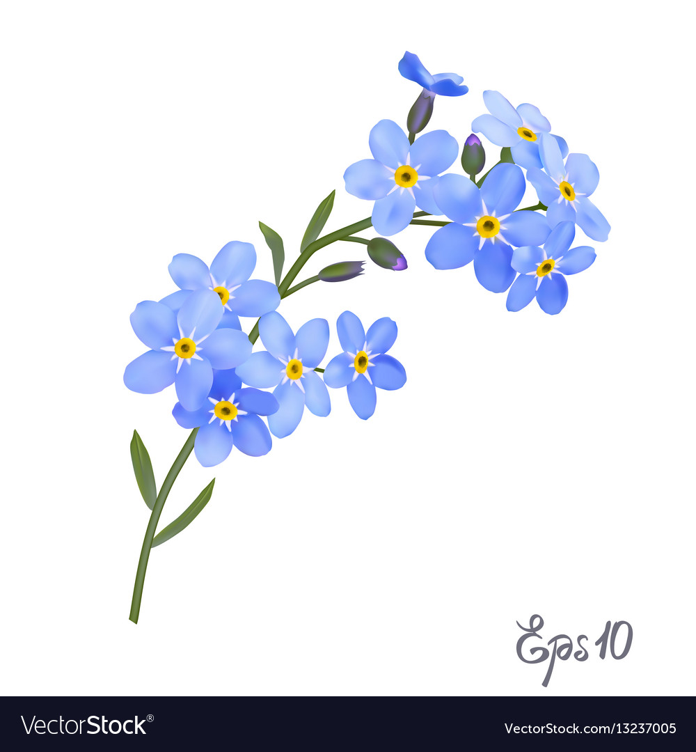 Branch Of Blue Forget Me Not Flowers Royalty Free Vector