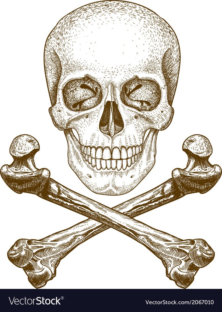 Engraving skull and bones vector image