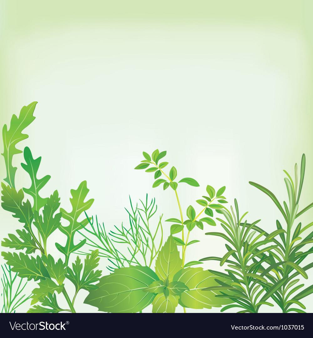 Frame of fresh herbs