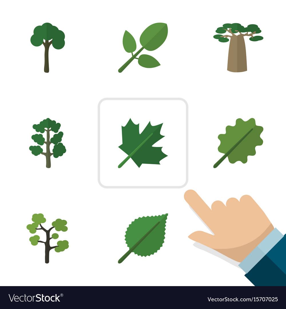 Flat icon natural set of oaken linden alder and