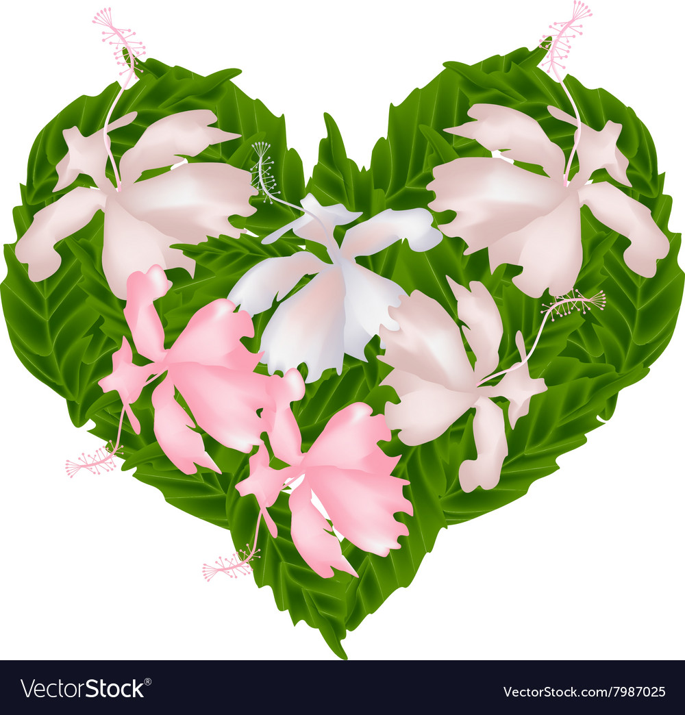Pink hibiscus flowers in a heart shape royalty free vector pink hibiscus flowers in a heart shape vector image izmirmasajfo