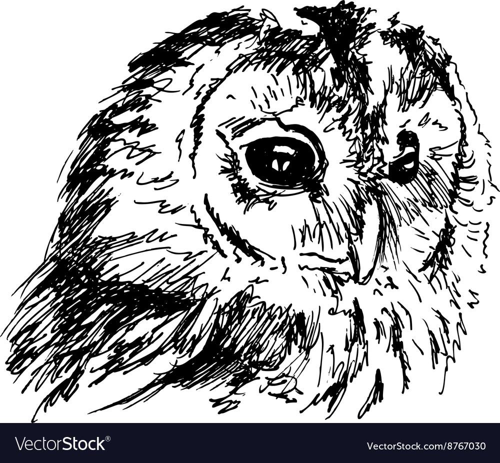 Hand sketch owl head vector image