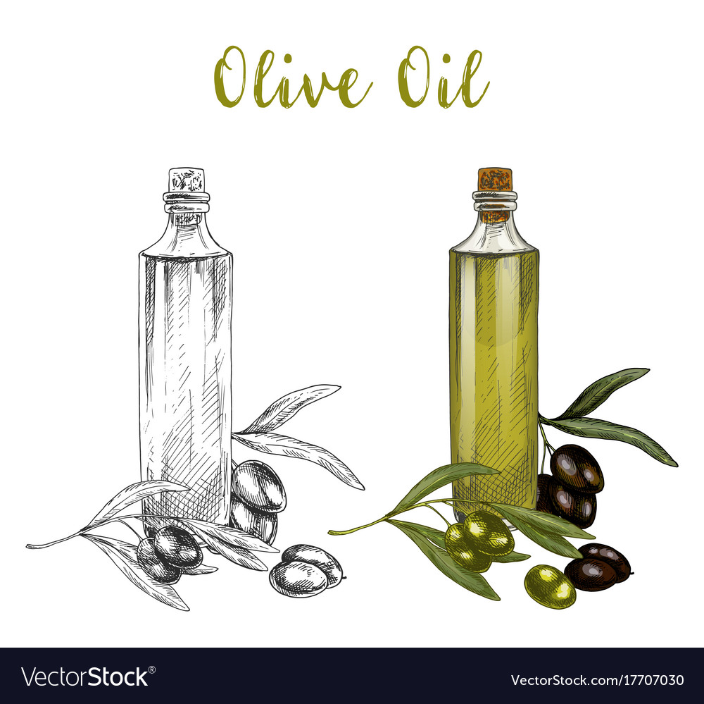 Sketched branch of olive oil in glass bottle