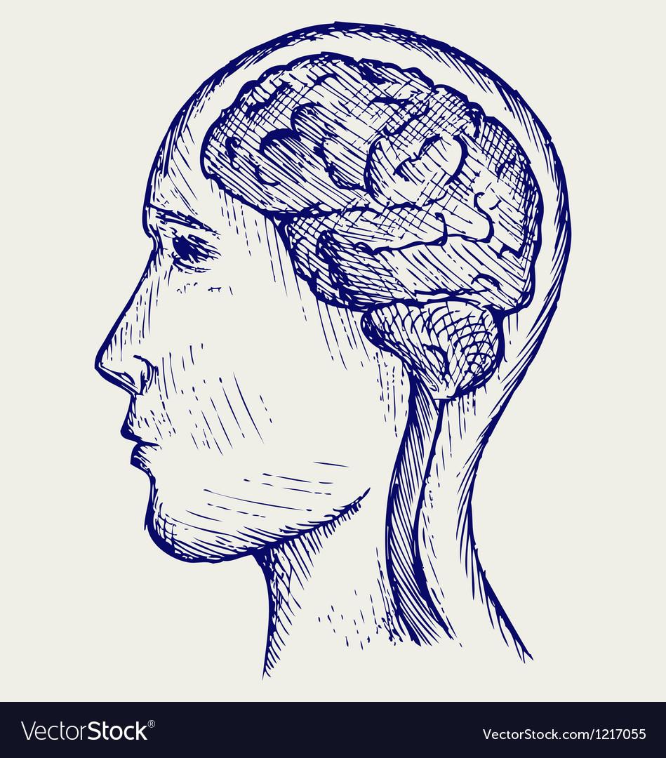 Human brain and head vector image