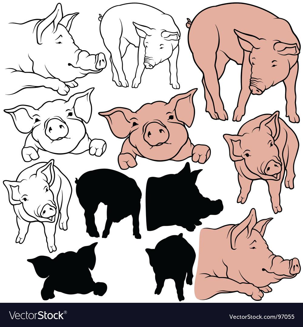 Pigs set vector image