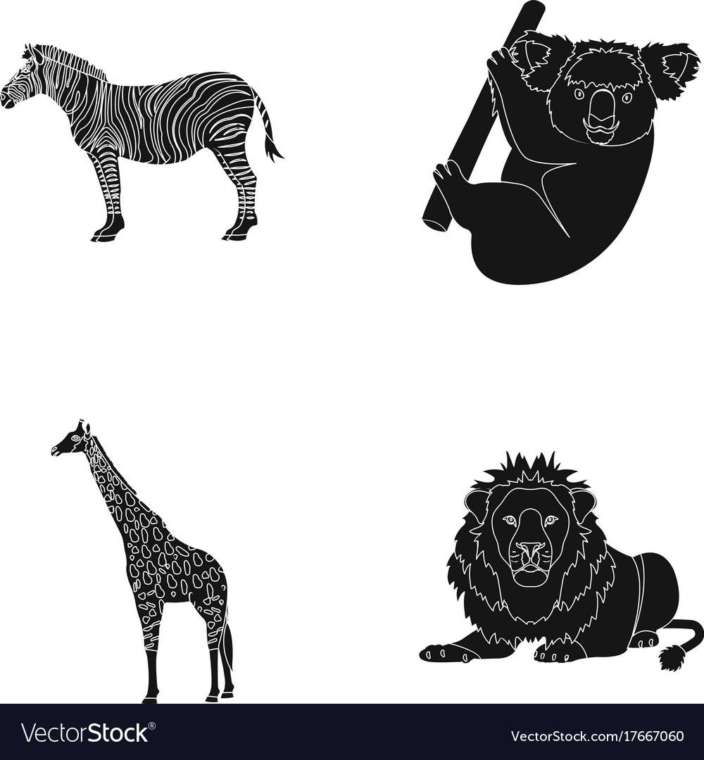 African zebra animal koala giraffe wild vector image
