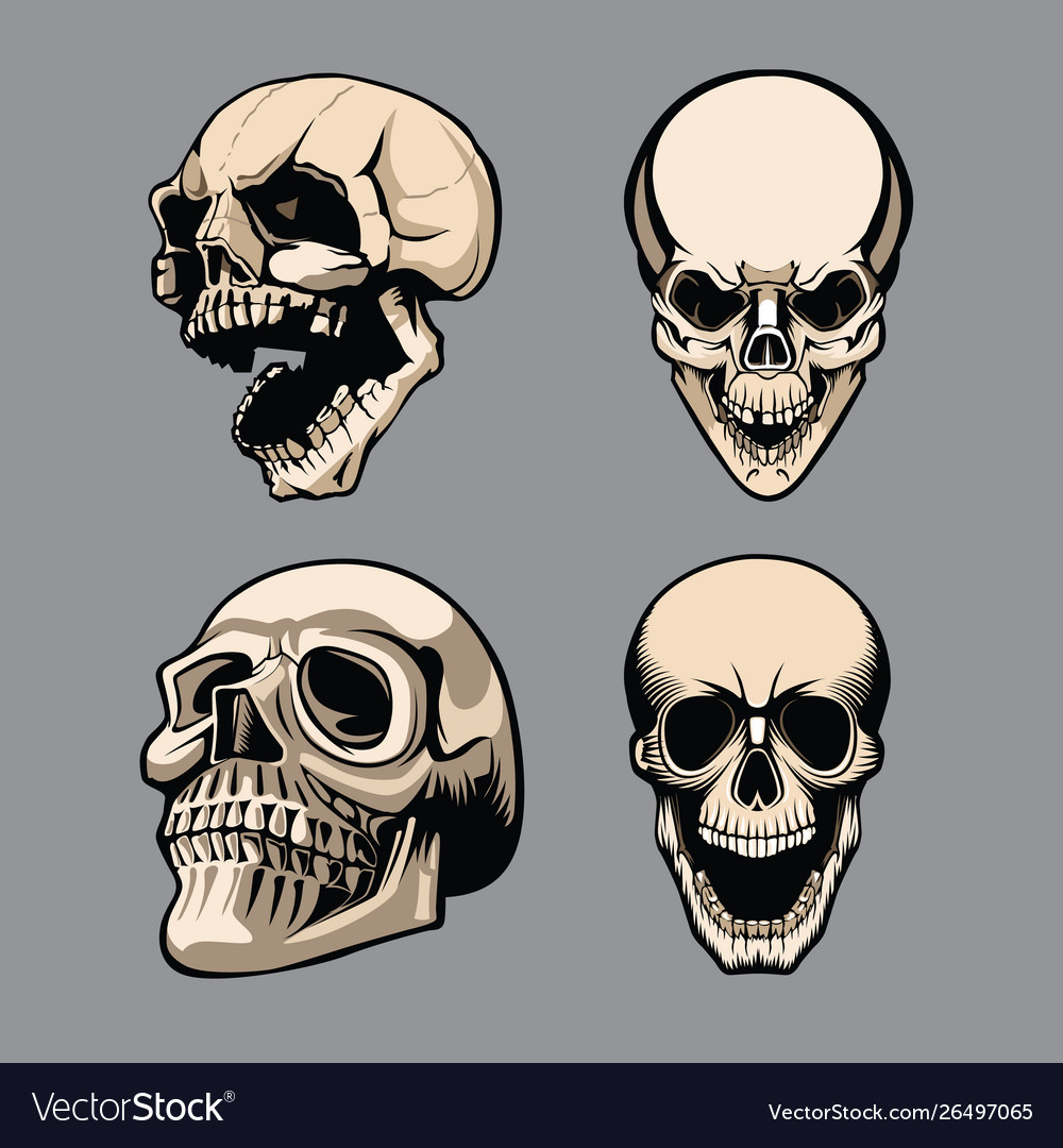 A set four skulls in different positions