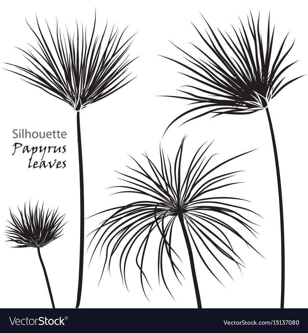 Silhouette tropical palm papyrus leaves black