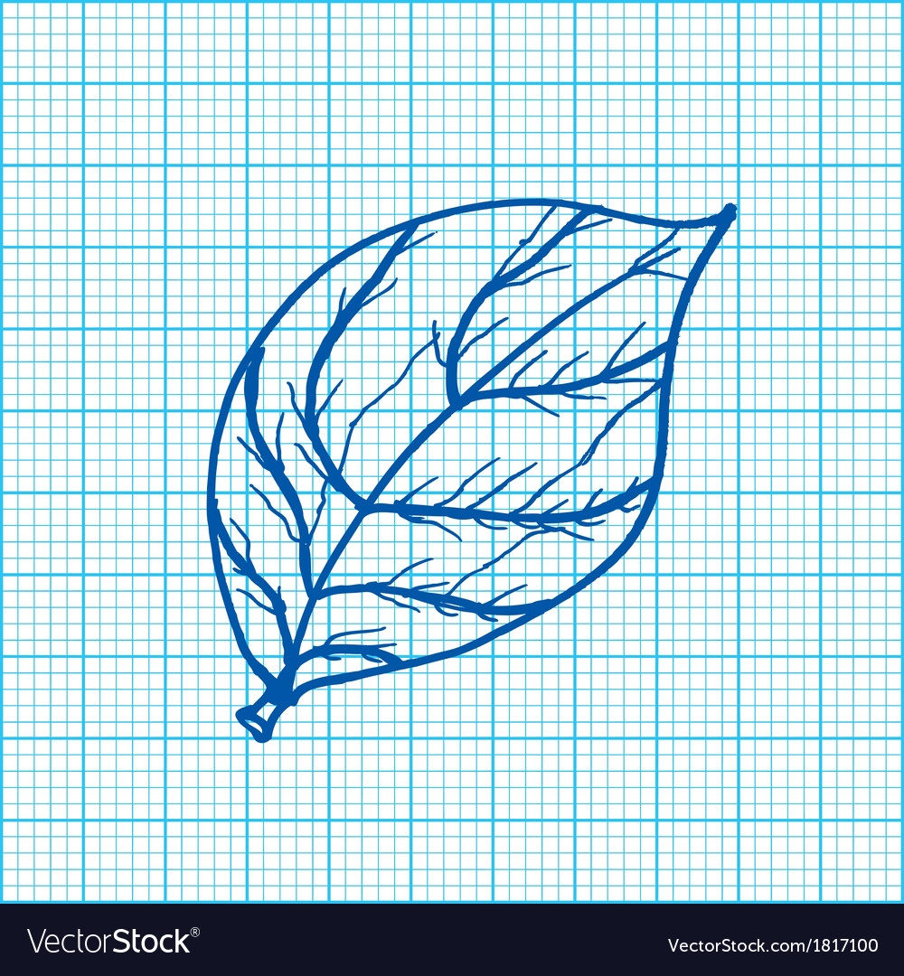 drawing of leaves on graph paper royalty free vector image
