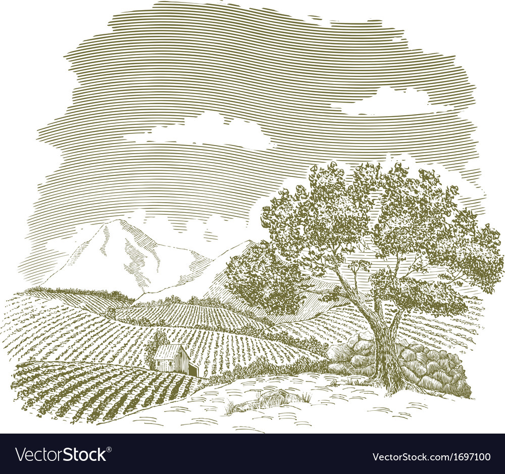 Mountain Farm Field Drawing vector image