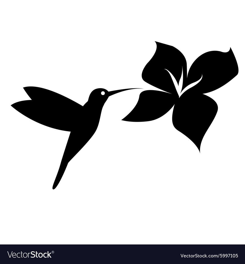Hummingbird silhouette black on white background vector image