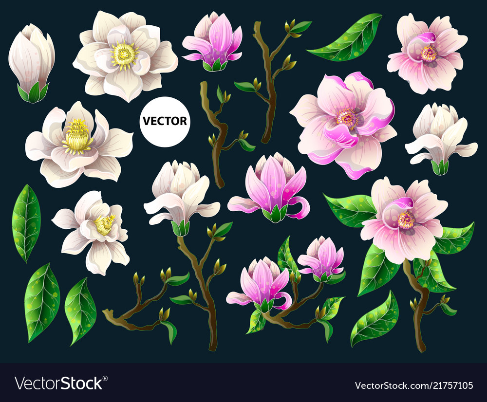 Pink Magnolia Flowers Royalty Free Vector