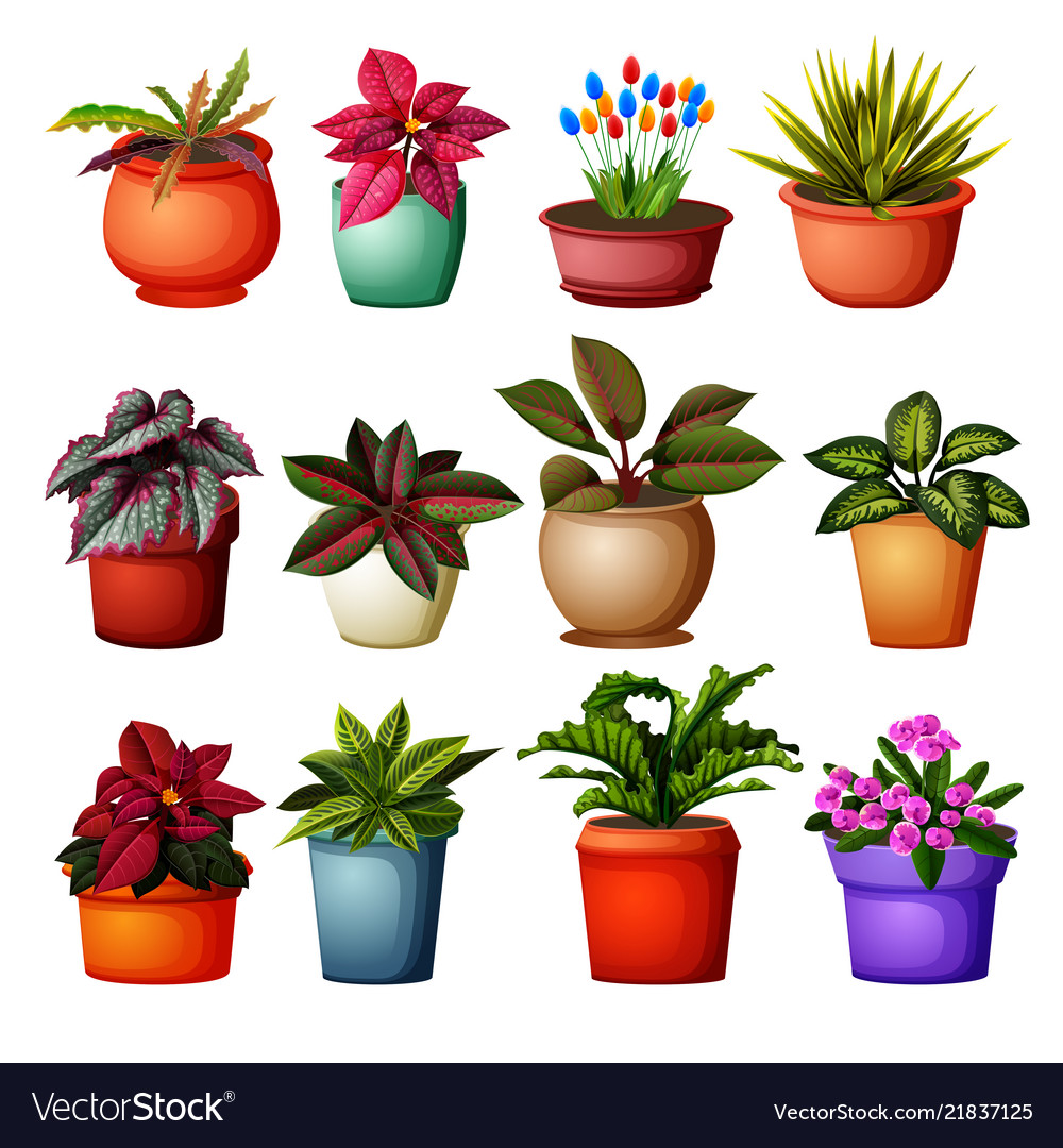 Collection of different plants grup