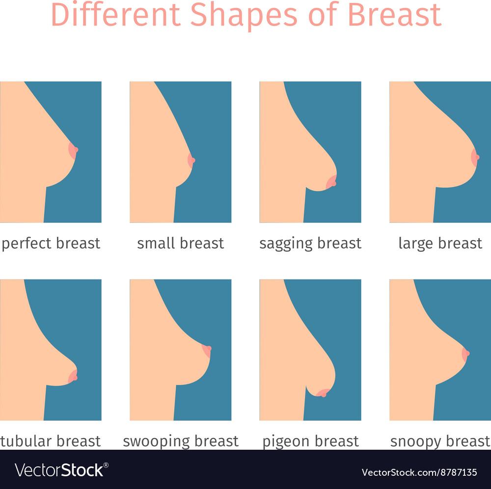 Cleavage (breasts) - Wikipedia