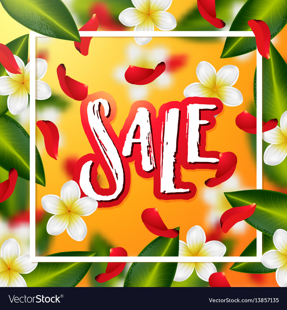 Hand drawn calligraphy sale vector image