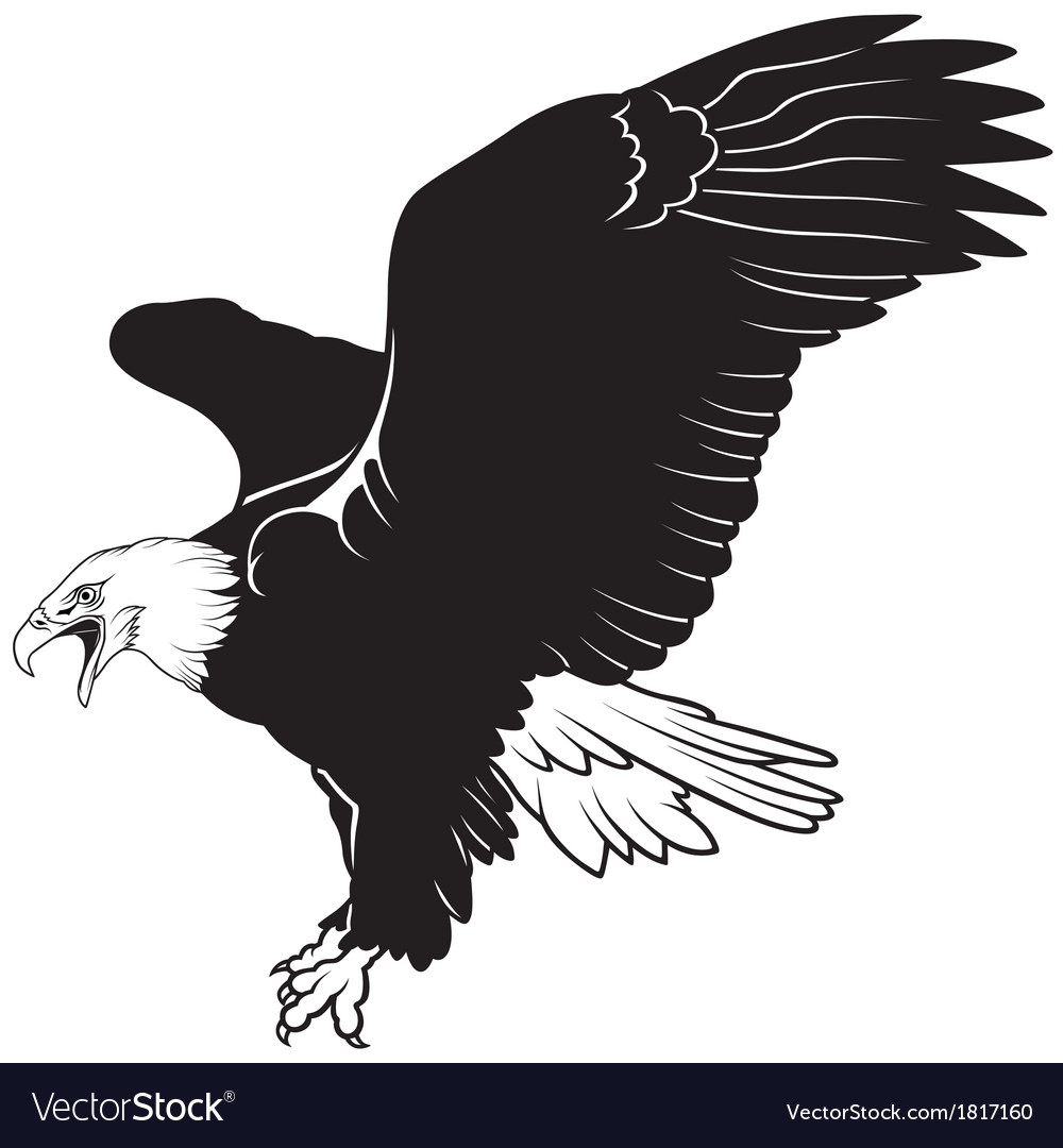 flying bald eagle royalty free vector image vectorstock rh vectorstock com bald eagle vector art free bald eagle vector art free