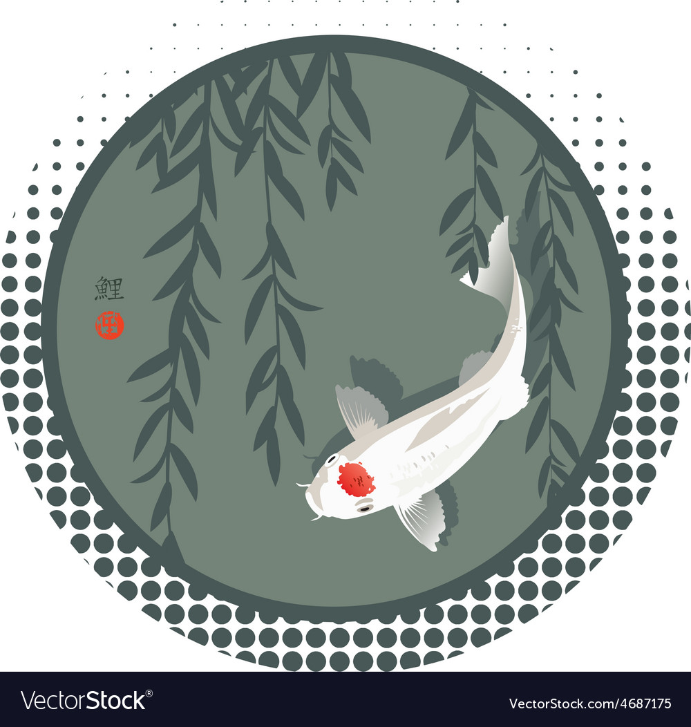 Koi carp and willow branches vector image
