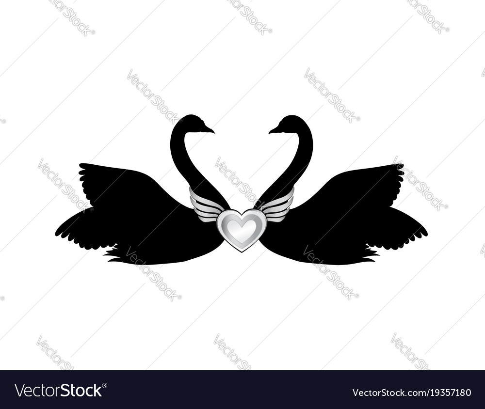 Birds in love couple of swans silhouette two love vector image
