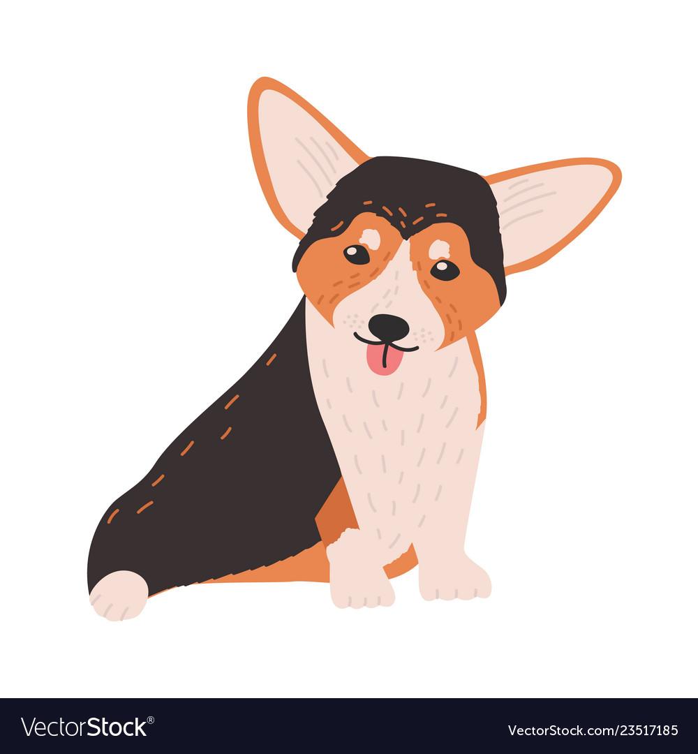 Cute cardigan welsh corgi small funny lovely dog