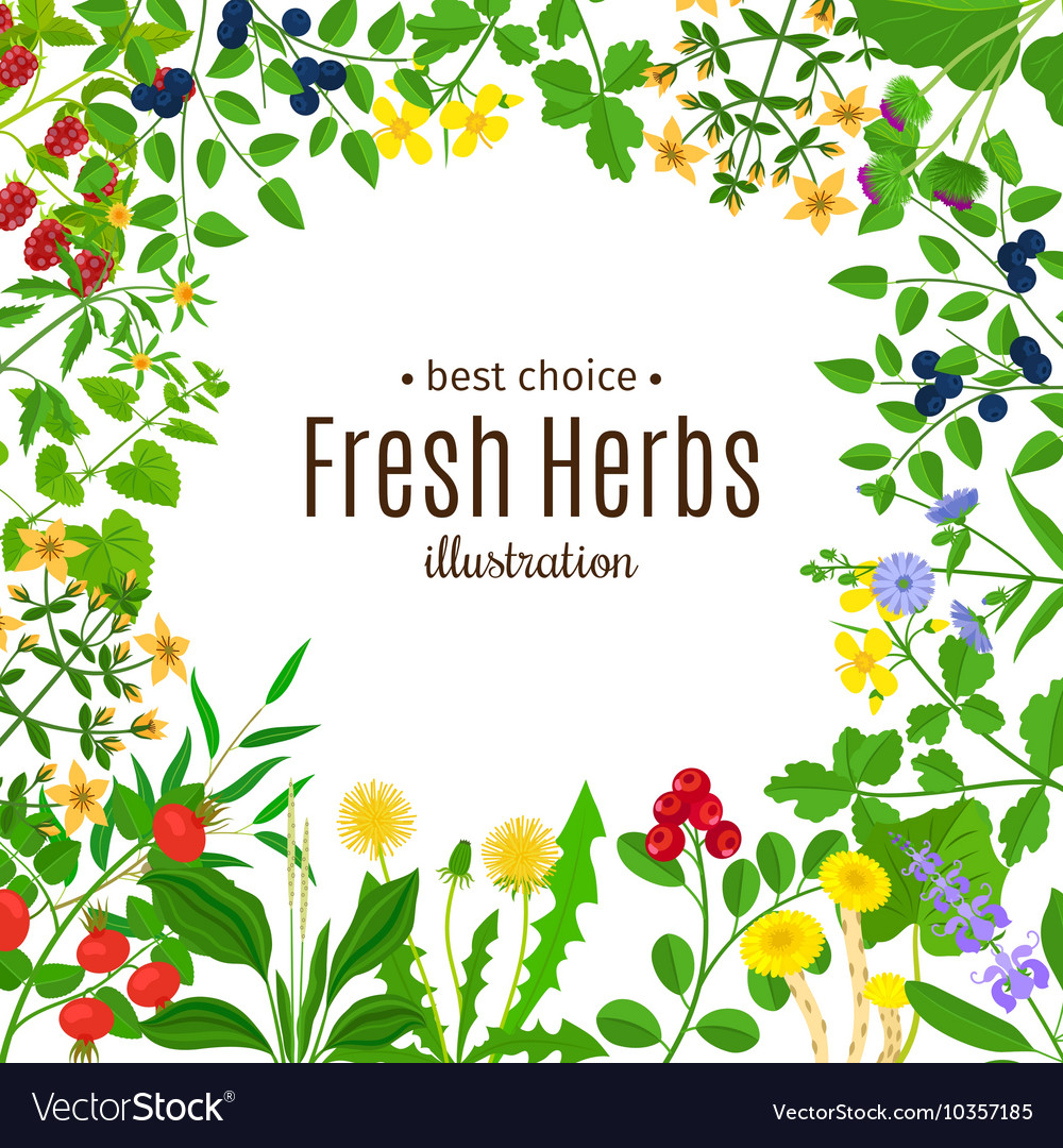 Medical herbs frame with text background