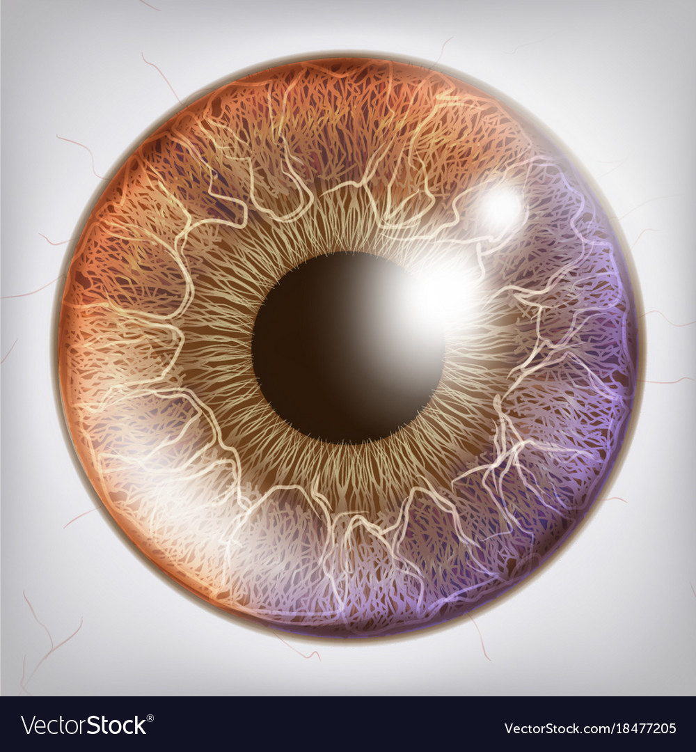 Eye iris realistic anatomy concept Royalty Free Vector Image