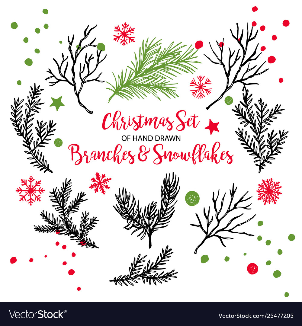 Hand drawn fir pine cedar coniferous branches
