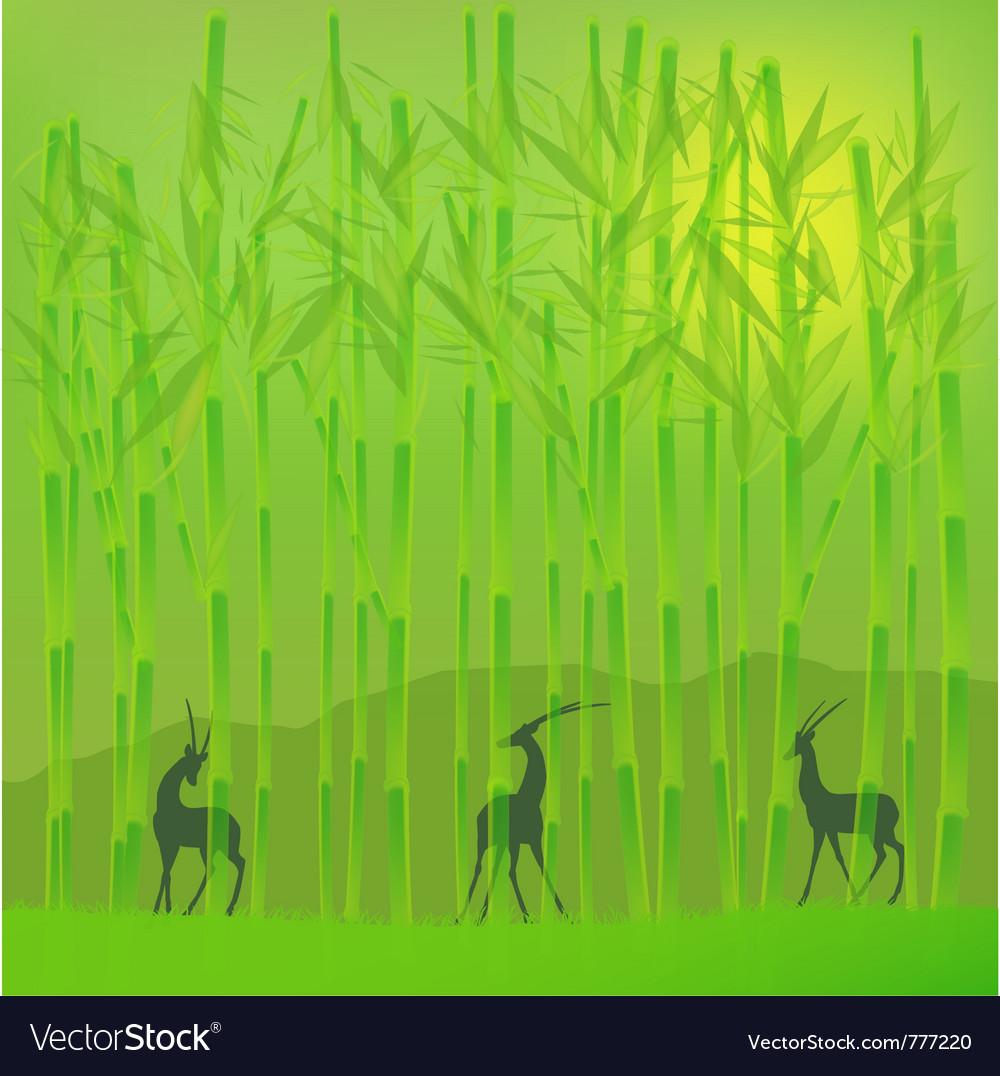Bamboo grove vector image