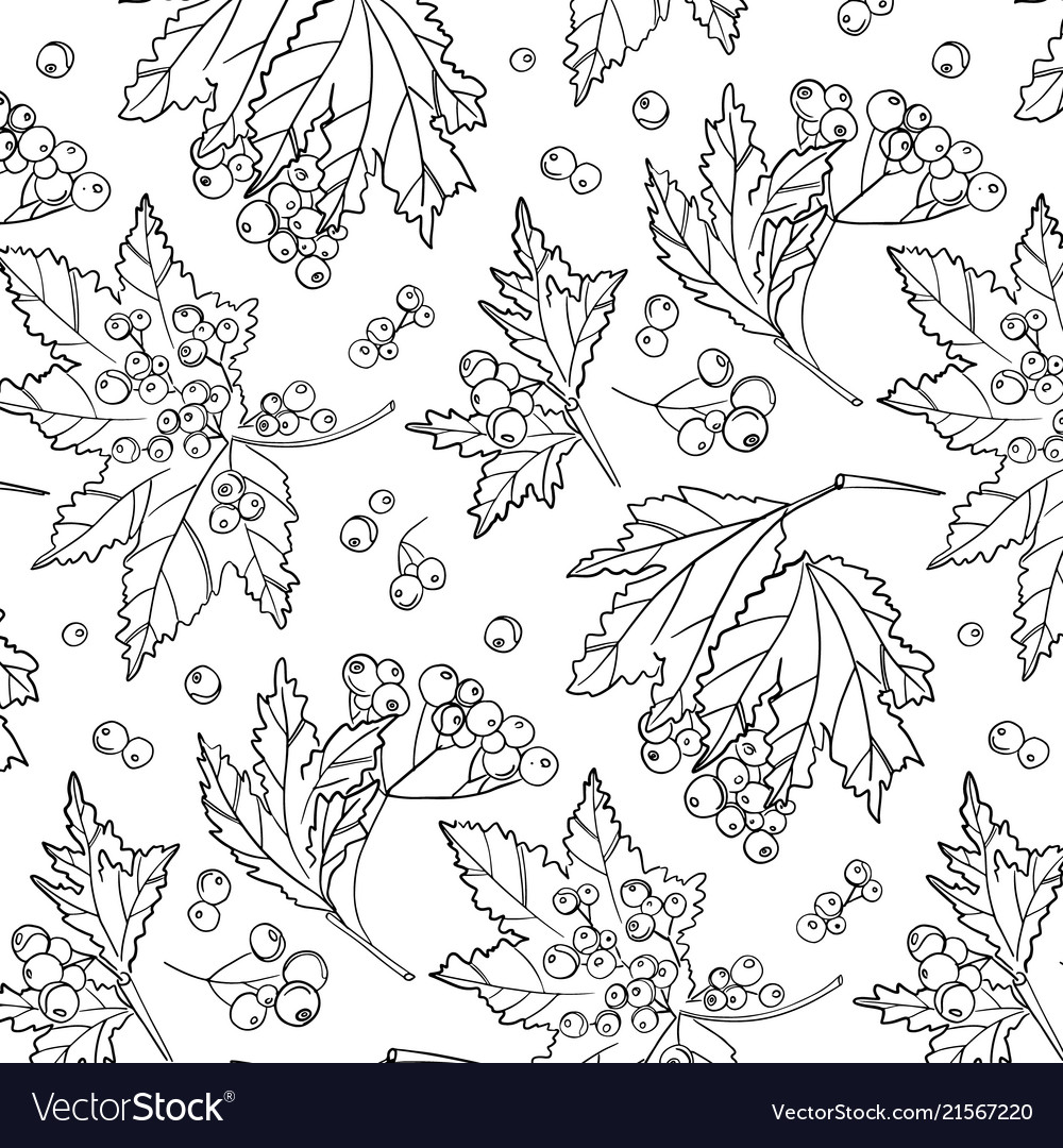 Rowan berry pattern autumn white black cover vector