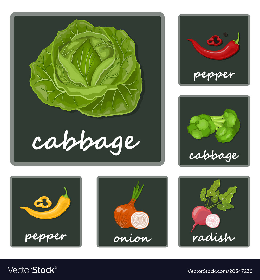 Vegetables icons flat set with radish pumpkin vector image