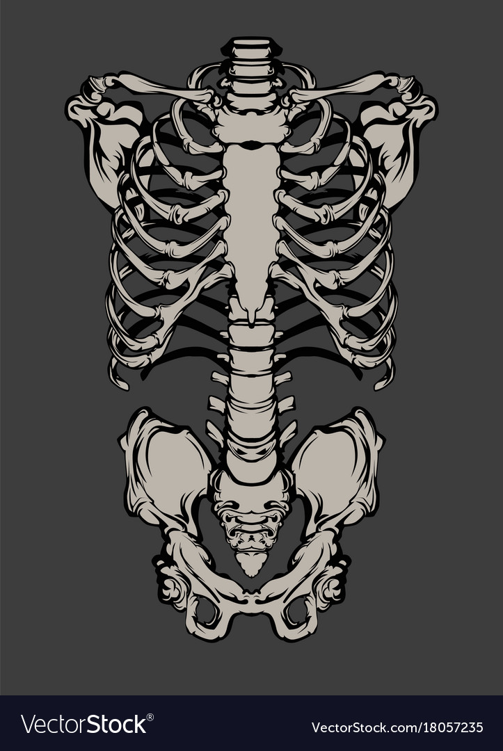 Hand drawn line art anatomically correct human