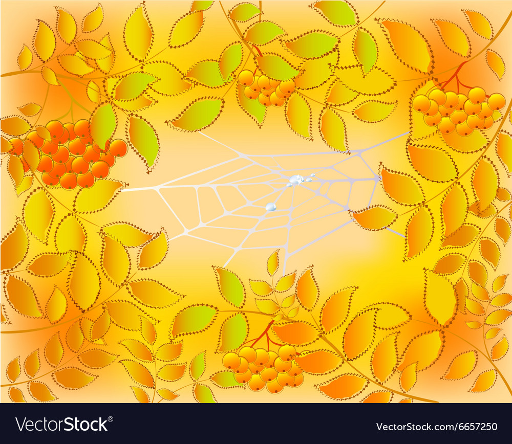 Background of autumn leaves rowan and web with