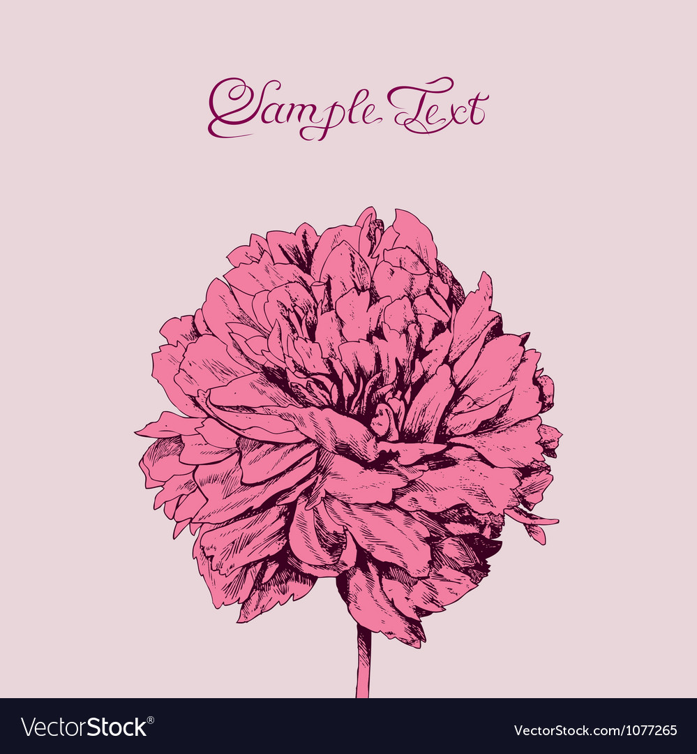 Beautiful pink flower card vector image