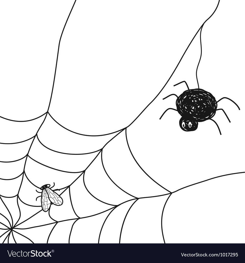 Spider with a fly in a web on white background