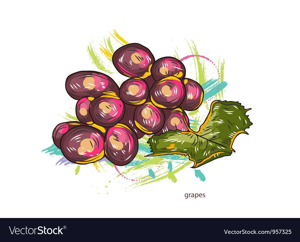 Grapes with colorful splashes vector image