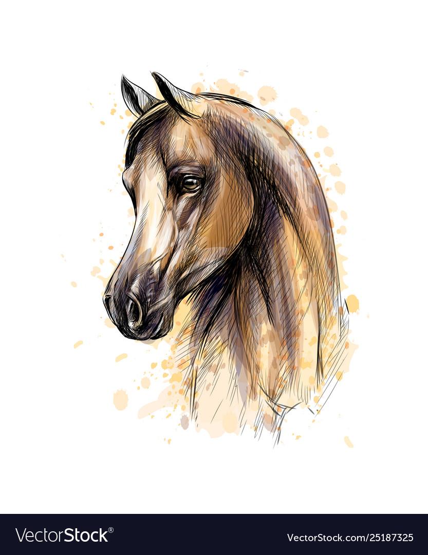 Horse Head Portrait From Splash Watercolors Vector Image