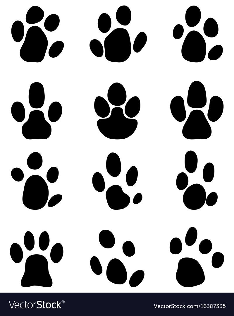 Black footprints of tapir
