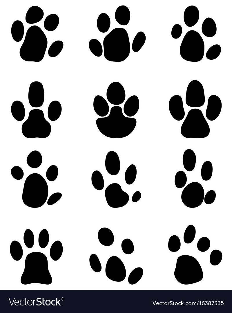 Black footprints tapir