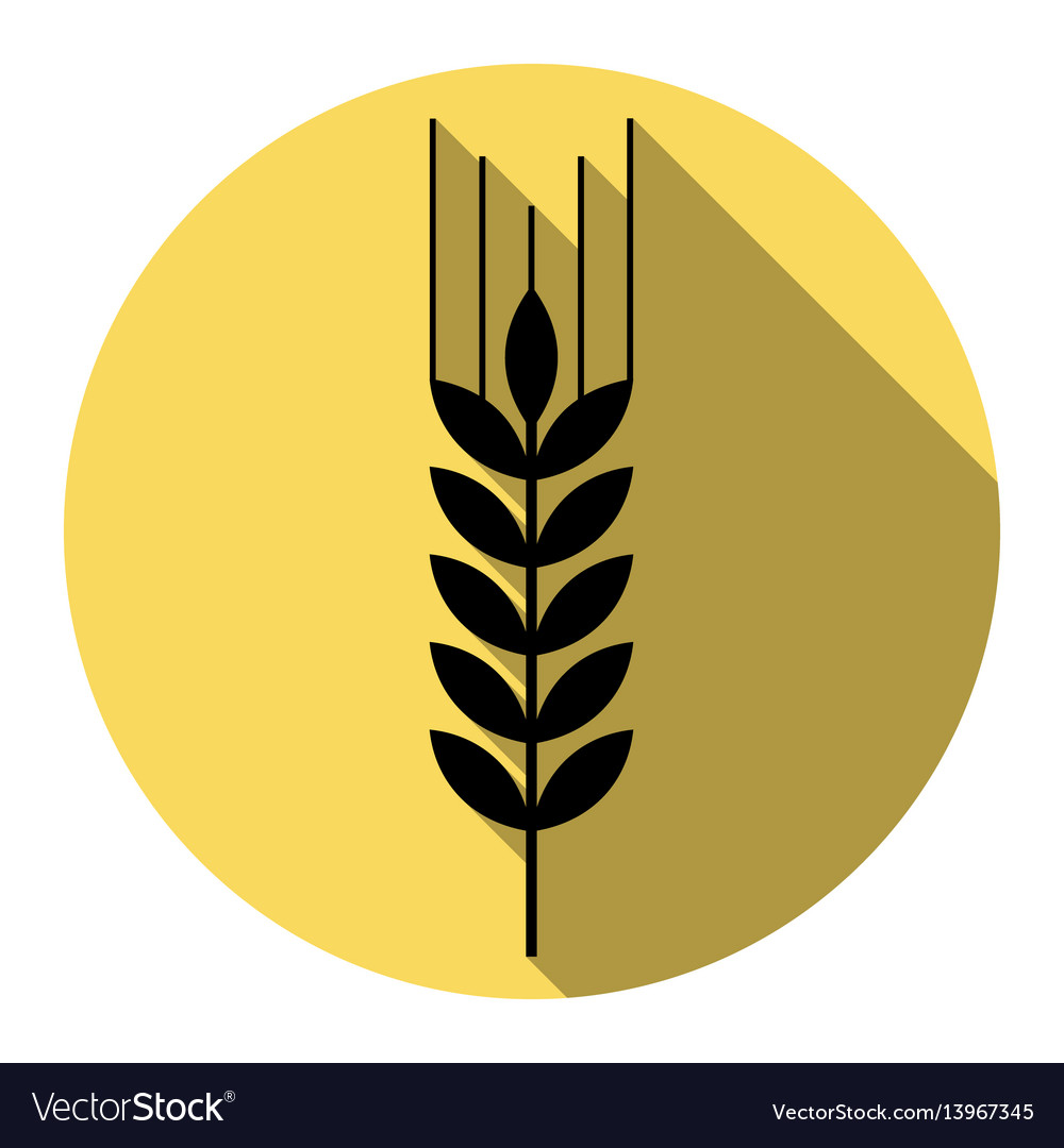 Wheat sign spike spica