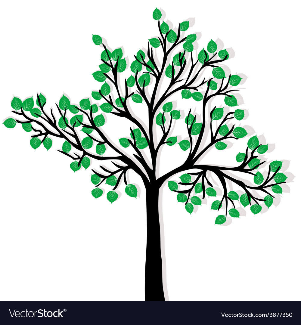 Green tree isolated over white background
