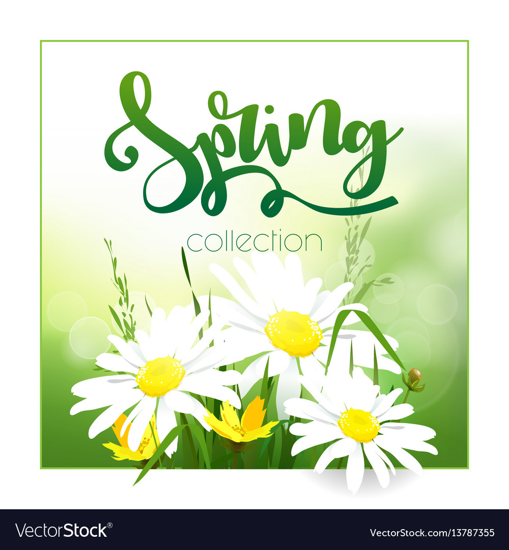 Spring time on background with spring flowers