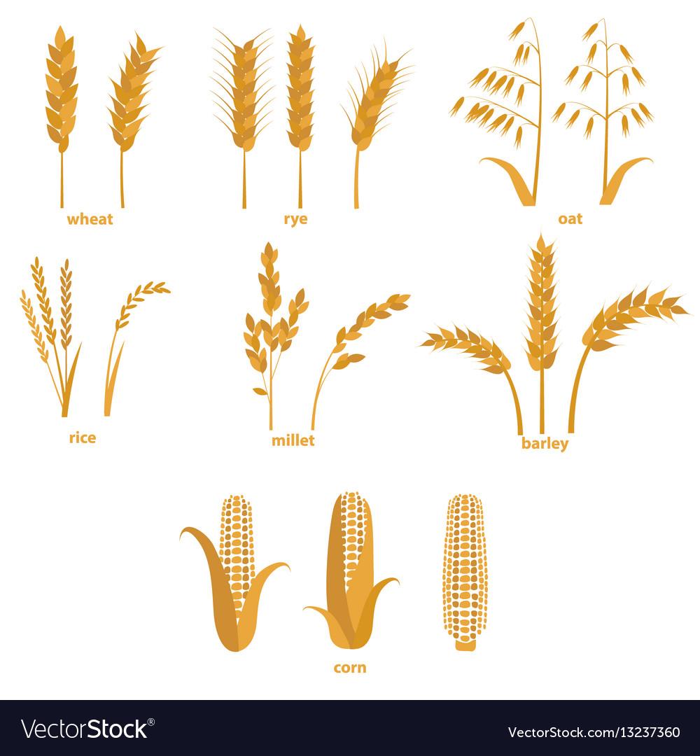 Cartoon cereals grain set