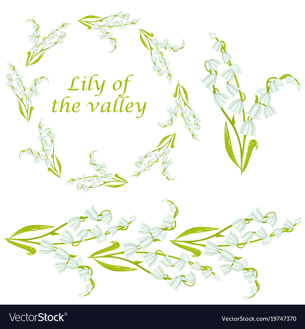 Cartoon lily of the valley spring flower set vector image izmirmasajfo